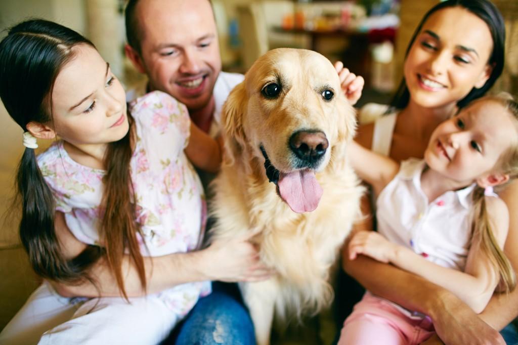 Paranaenses estão no ranking nacional de famílias que possuem cachorros